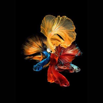Glassbilde Fishes nr 2 - 80x80 cm