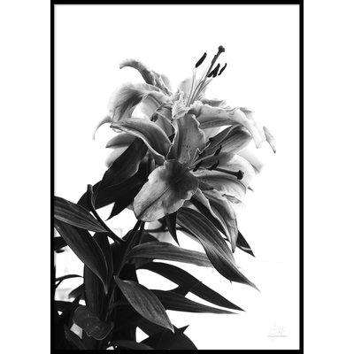 BLACK AND WHITE FLOWER - Plakat 50x70 cm