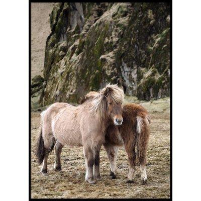 ICELAND HORSES - Plakat 50x70 cm
