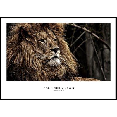 LION PORTRAIT - Plakat 50x70 cm