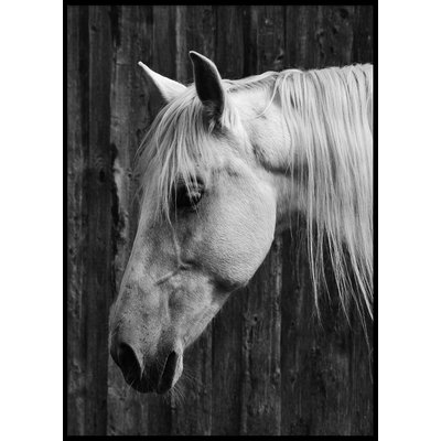 HORSE - Plakat 50x70 cm
