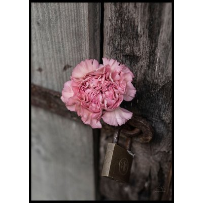 PINK FLOWER CLOSE UP - Plakat 50x70 cm